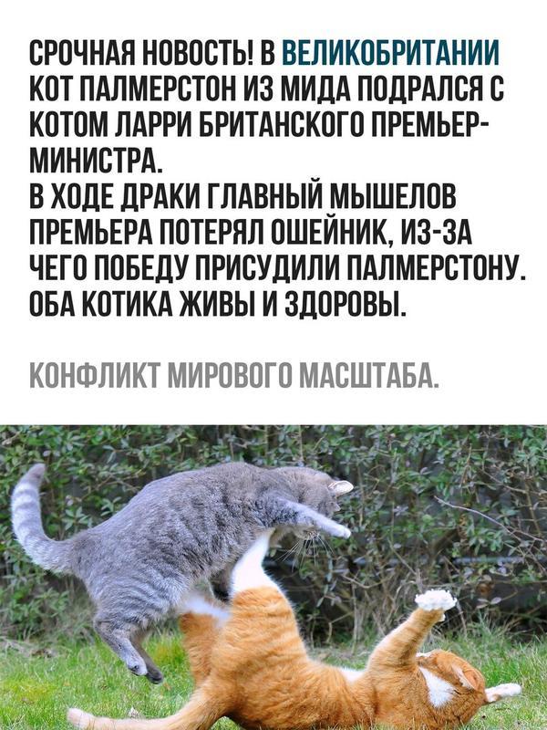 кот из мида подрался с котом британского премьер-министра