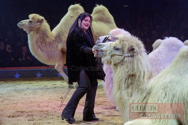 gourmandise pour les chameaux du Cirque Knie