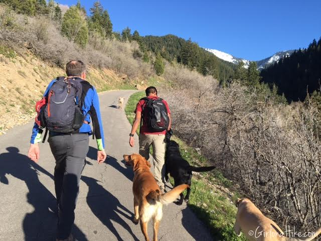 Bowman Fork Trail, Millcreek Canyon, Utah, Hiking in Utah with Dogs