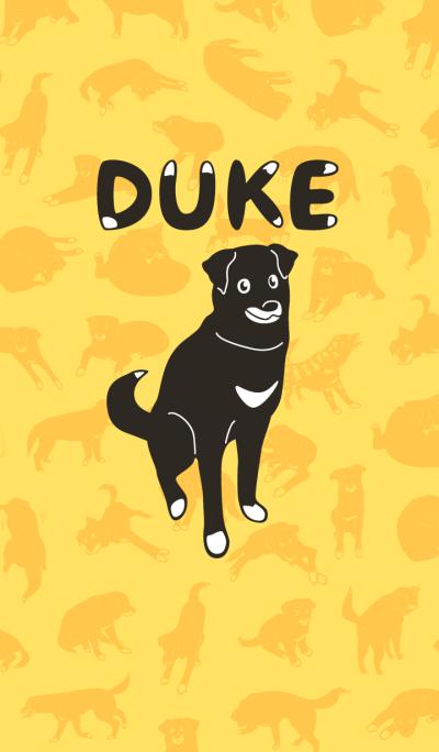 Black dog Duke