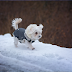 Caring For Your Pets During Winter