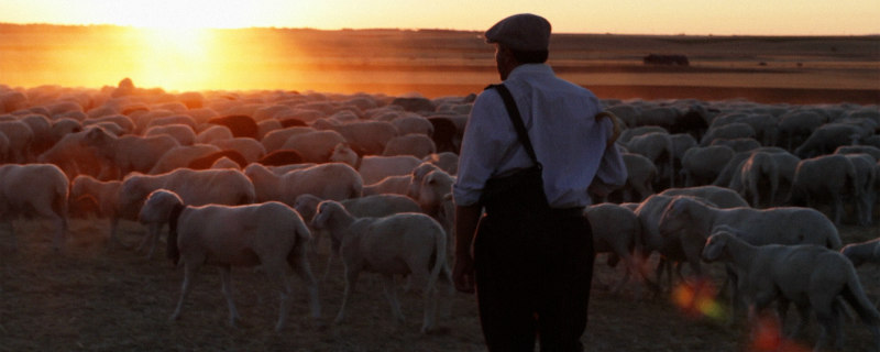 the shepherd el pastor film