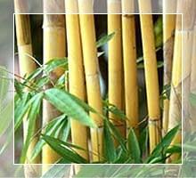 Bambooterapia _ massagem relaxante