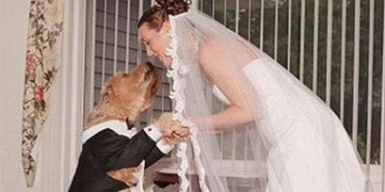 Wanita Menikah Dengan Anjing
