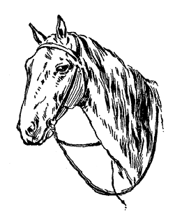 horse image illustration digital