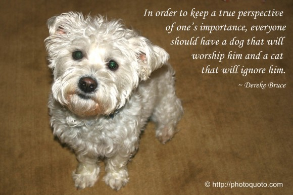 When A Dog Dies Quotes Quotesgram: Keeping Perspective Quotes. QuotesGram