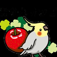 Cockatiel P-chan Vol.3