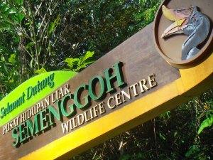 Pusat Hidupan Liar Semenggoh Kuching
