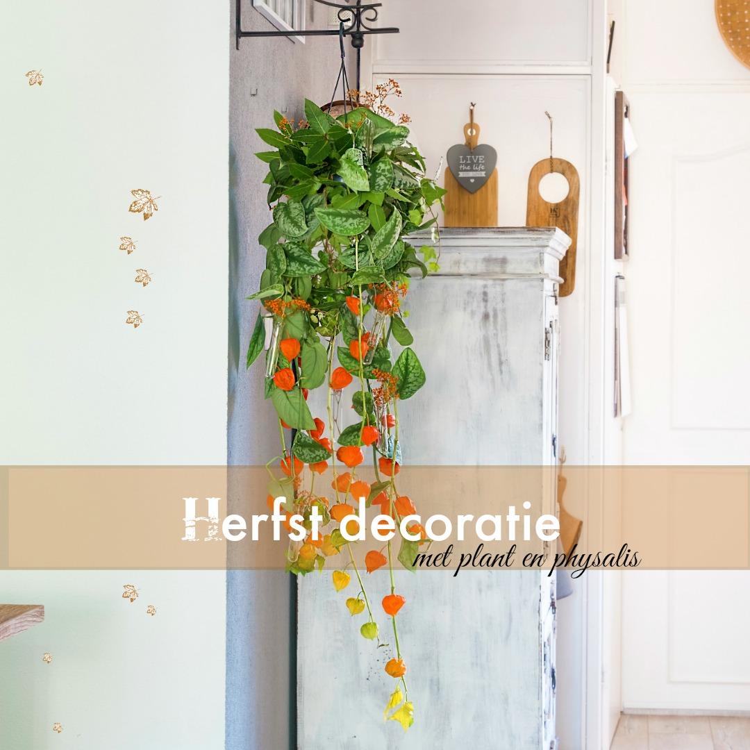 Herfst decoratie met plant en physalis lampionnetjes for Decoratie herfst
