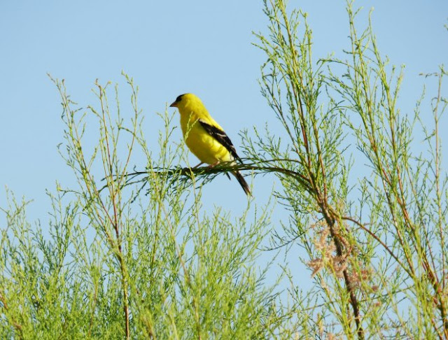 Bird of Utah Lake