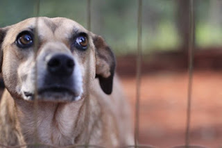 Código de Direito e Bem-Estar Animal se torna lei