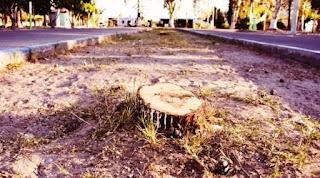 jose morales en zonda donde comentó la tala de pino