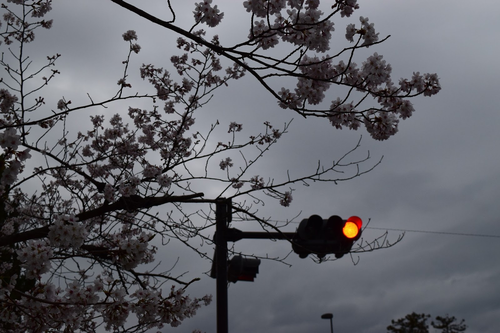 Sakura Traffic light