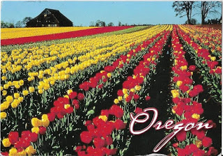 Oregon tulip farm