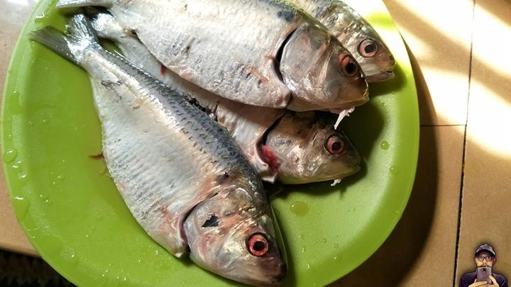 Ikan Terubok Sedap Digulai Kari