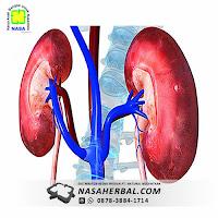 Fungsi Ginjal, Organ Penting Dalam Tubuh