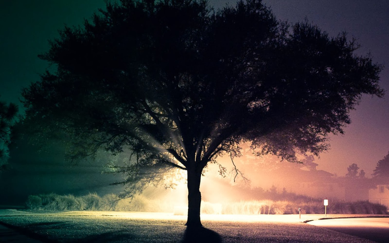 wallpapers: Trees In The Mist