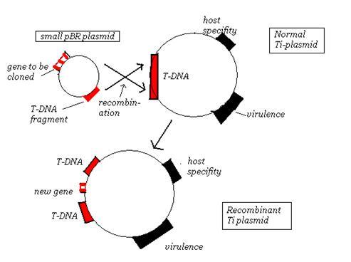 Gl1000 Dyna S Wiring Diagram Gl1100 Wiring Diagram Wiring