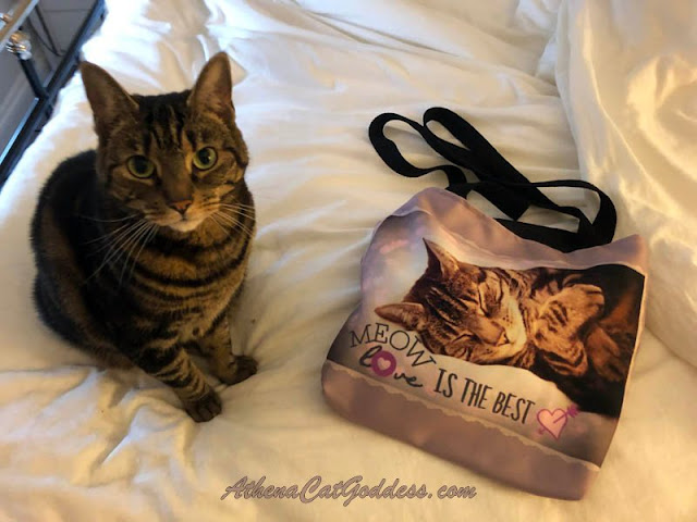 tabby cat posing next to tote bag