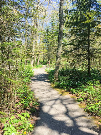 Black Trail at Whitefish Dune State Park