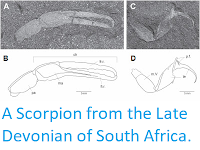 http://sciencythoughts.blogspot.co.uk/2013/12/a-scorpion-from-late-devonian-of-south.html