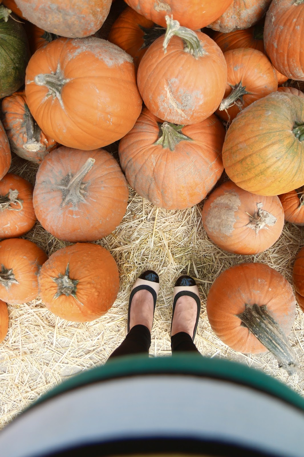 Kuwahara farms, pumpkin patch, draper UT, fall activities, yosi Samra, fall maternity outfit