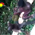 Watch video of two Ghanaian illegal chainsaw operators forced to slap each other