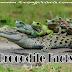 मगरमच्छ से जुड़े 26 अनोखे रोचक तथ्य और जानकारी crocodile facts in hindi
