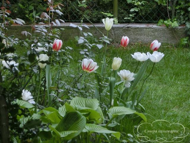 тюльпаны, хюгге, рустик, блоги о жизни за границей, ваби саби, о жизни в венгрии