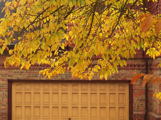 A butter-yellow leafed tree with matching garage door