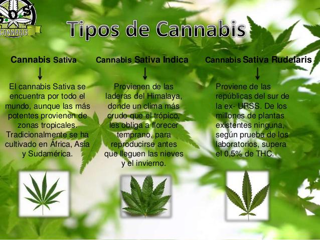 S O S Cannabis Uruguay La Diferencias Entre El Cannabsi Sativa Indica Y Ruderales