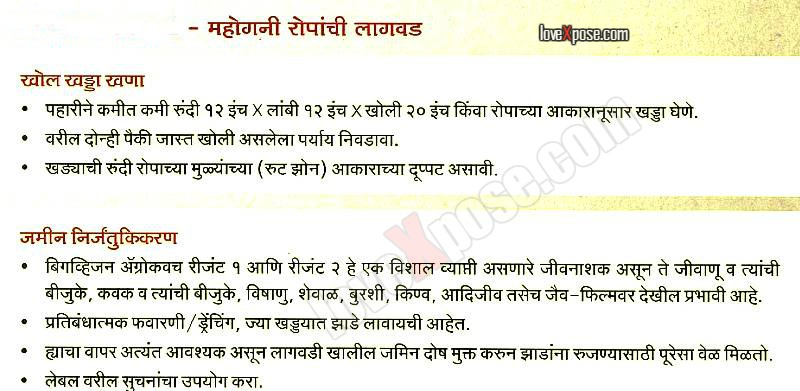 Mahogany Tree Plantation details procedure in Marathi ...