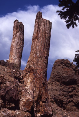 Petrified forests do not refute the Genesis Flood. Instead, they testify of it.