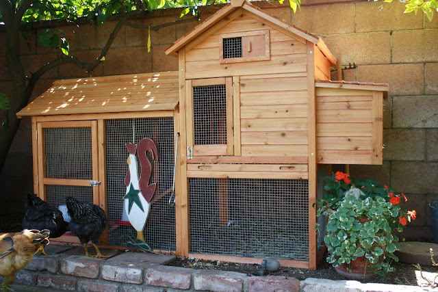 small urban chicken coop
