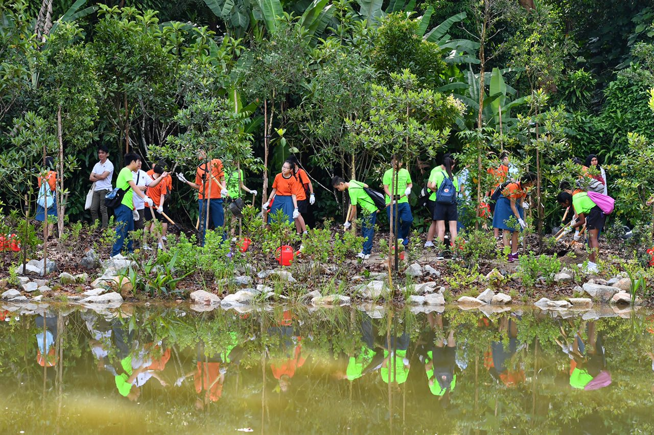 Mass tree planting at the Keppel Discovery Wetlands in the Learning Forest of Singapore Botanic Gardens on March 31, 2017.