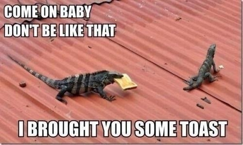 come on baby don't be like that lizard funny corrugated iron roof