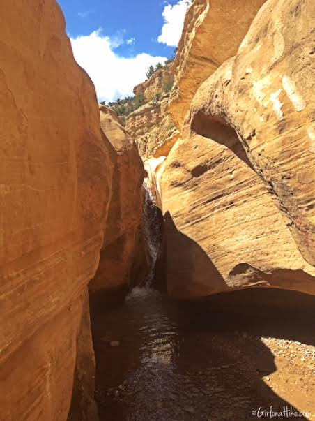 Hiking Willis Creek Slot Canyon, Hiking in Utah with Dogs