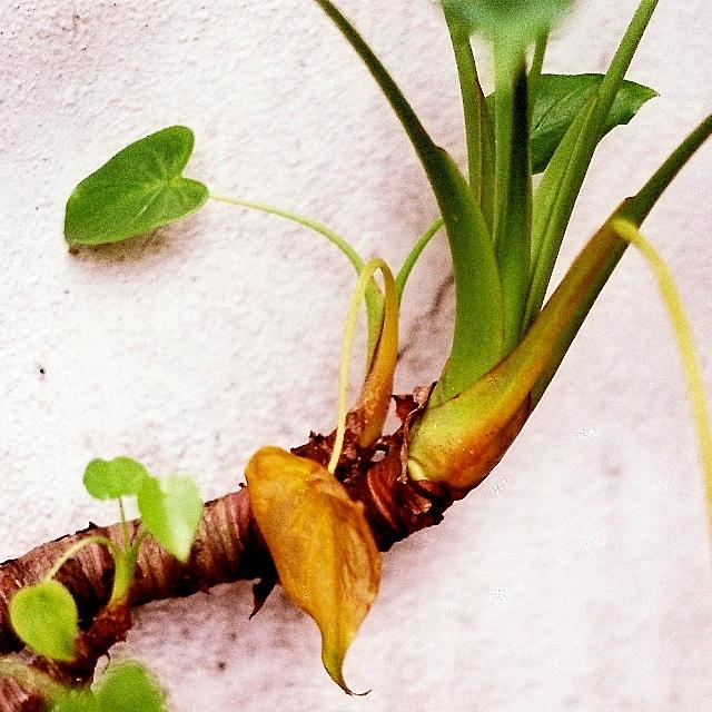 #AnalogDiary A Garden Ensemble, AF Nikkor 50mm F1.8 D 01