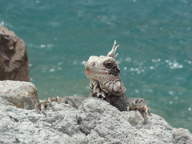 St. Thomas Port Iguanas