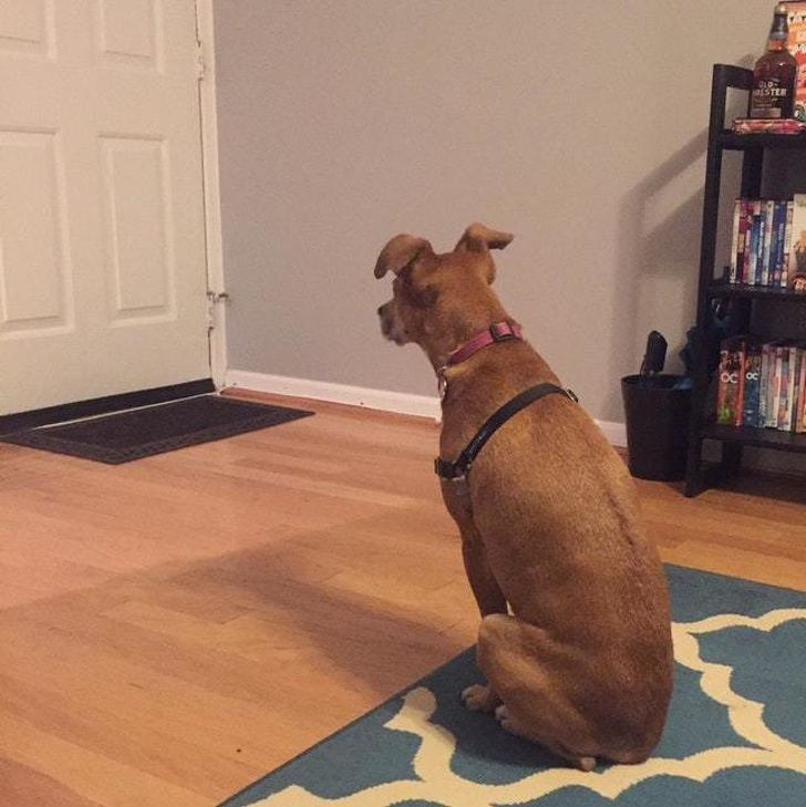 23 Touching Pictures Show That Dogs Are Too Good For Our World