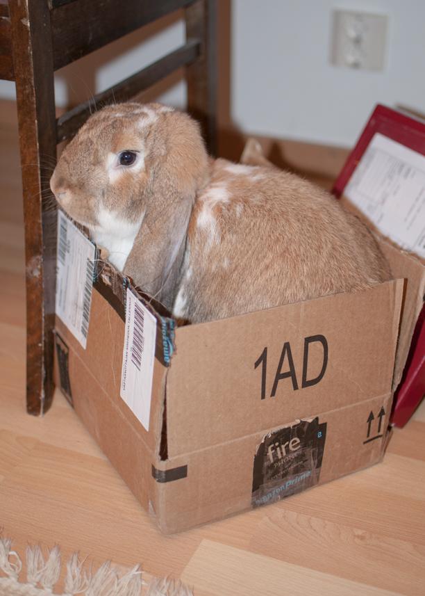 Ranskanluppa laatikossa.