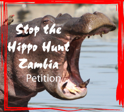https://secure.avaaz.org/en/petition/To_The_Director_of_DNPW_Paul_Zyambo_Tourism_Minister_Hon_Jean_Kapata_Stop_the_Hippo_Hunting_Cull_in_South_Luangwa_Zambia/?msOzQkb