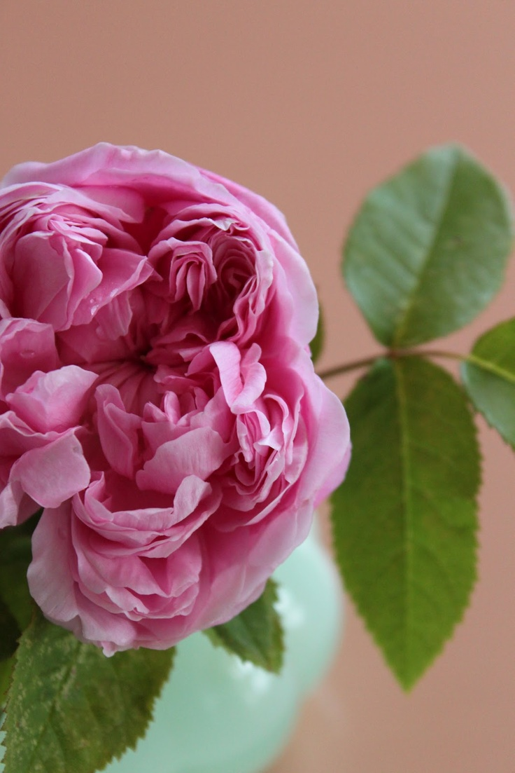 pensieri in forma di rosa la petite fleur rose. Black Bedroom Furniture Sets. Home Design Ideas