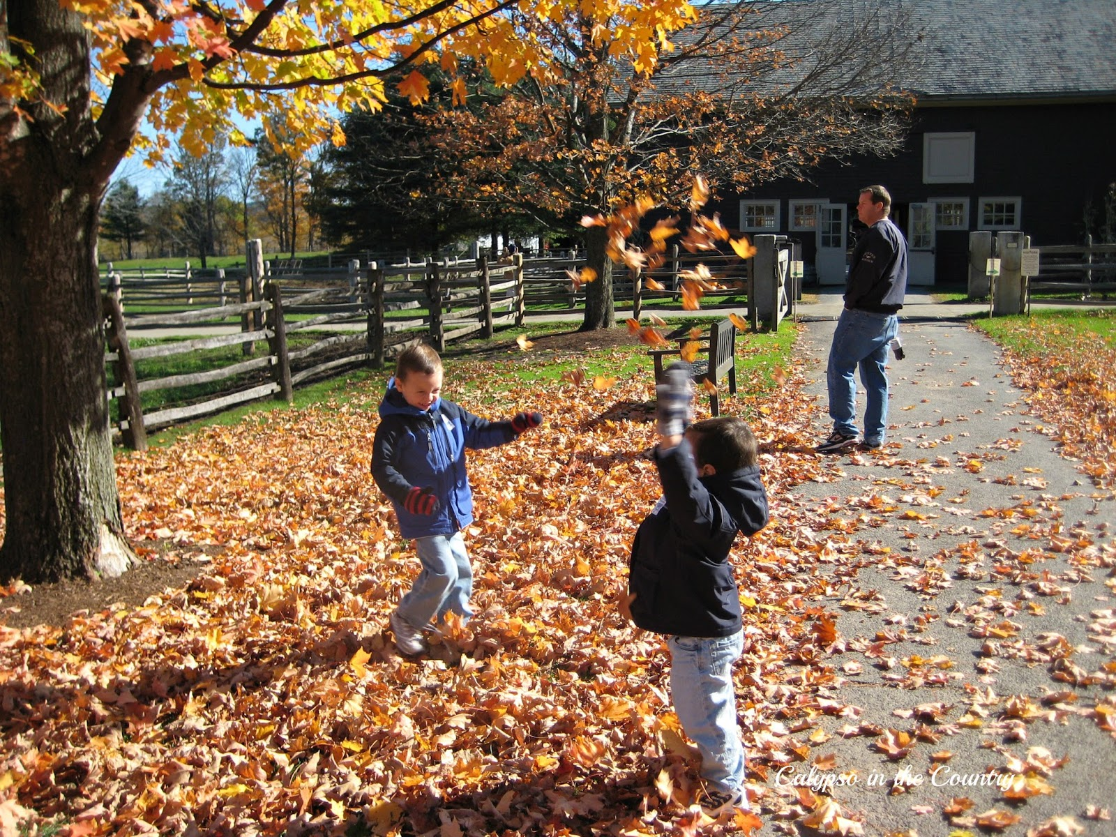 Boys playing in the fall leaves