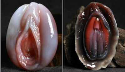 Omg!! Check Out These Photos Of A Mysterious Fish That Look Exactly Like A Woman's V@gina… It Is Called ShellFish!