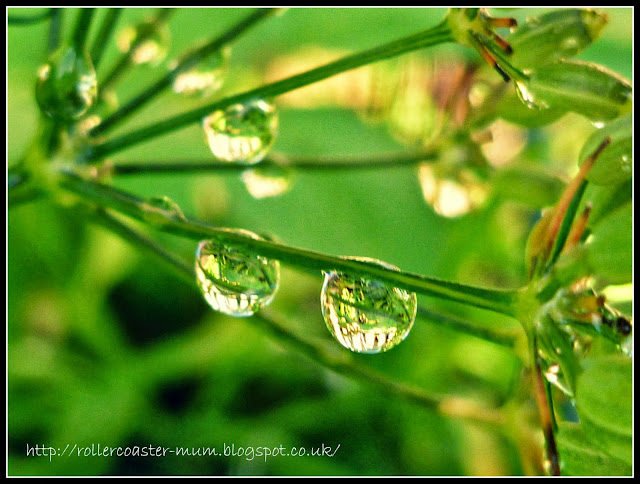water drop refelections
