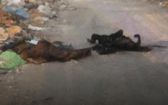 """Con calcinado y 5 ejecutados más """"El Marro"""" sigue cobrando víctimas en Guanajuato!"""