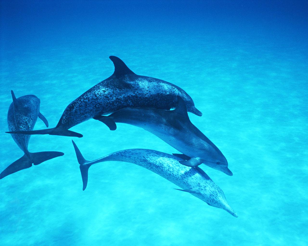 Dolphin Wallpaper HQ ~ Taste Wallpapers