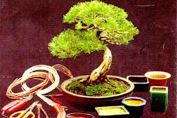 Tanaman Keberuntungan dan Pohon Bonsai, Rumah dan Bisnis Anda