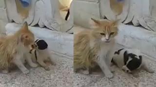 Γάτα άκουσε κουτάβι να κλαίει – Έγινε η μητέρα του (Βίντεο)